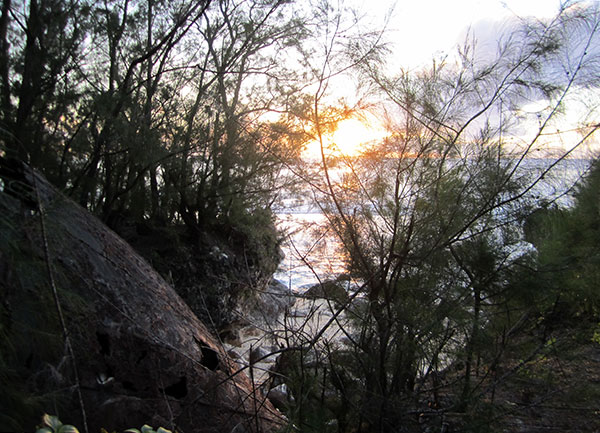 edna at sunset