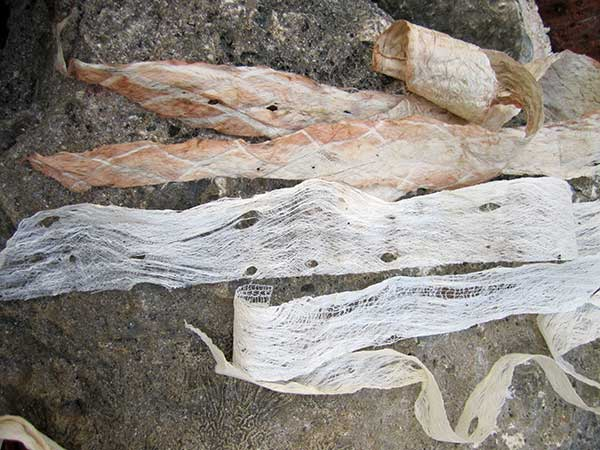 Strips of bark cloth