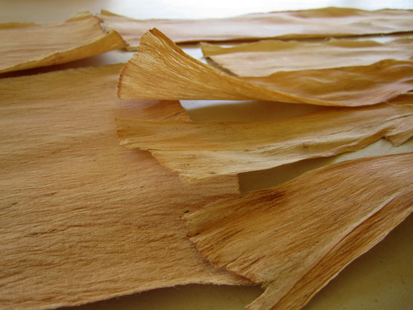 Dried bark cloth
