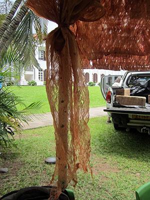 Fine tapa from Fiji