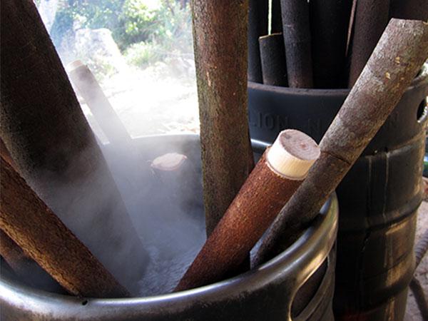 Boiling banyan roots