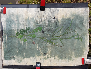weeds as print material